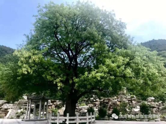 5. 2019年秋季断食205.png