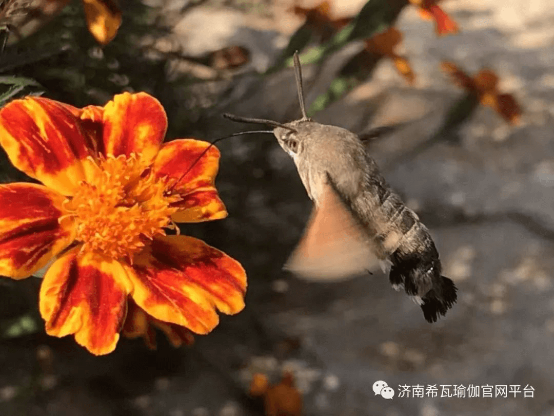 济南希瓦瑜伽2019年度秋季静修营圆满结束。1082.png