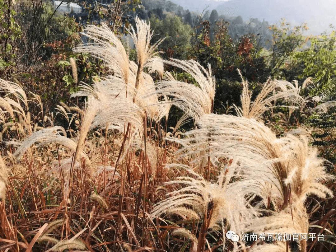 济南希瓦瑜伽2019年度秋季静修营圆满结束。1084.png